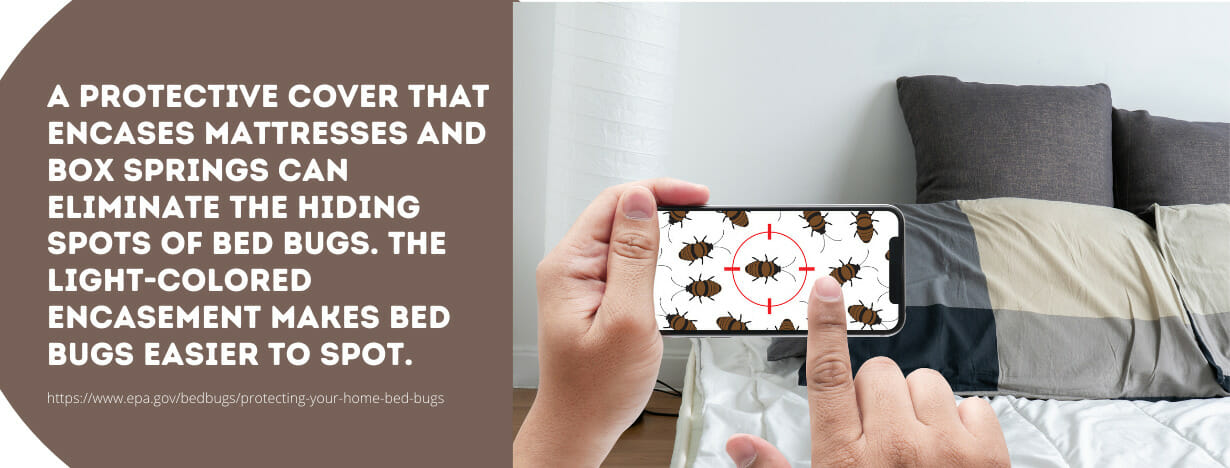 Bed Bugs fact 1