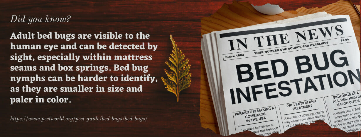 Bed Bugs fact 2