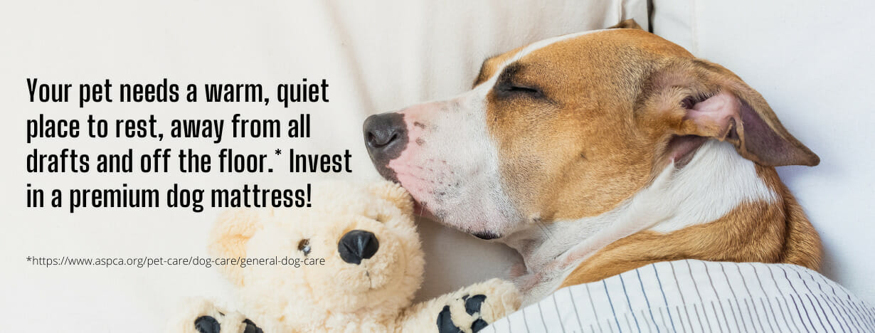 OMR Dog Mattresses fact 1
