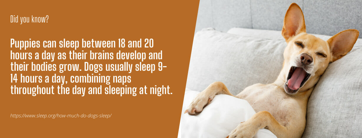 OMR Dog Mattresses fact 2