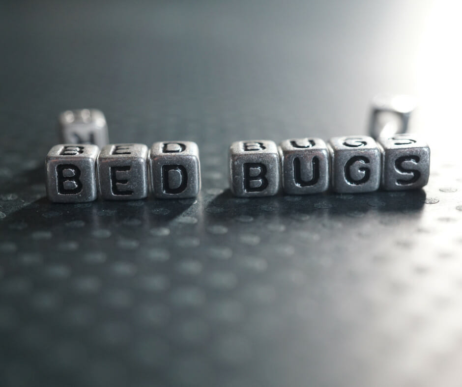 bed bugs concept 1