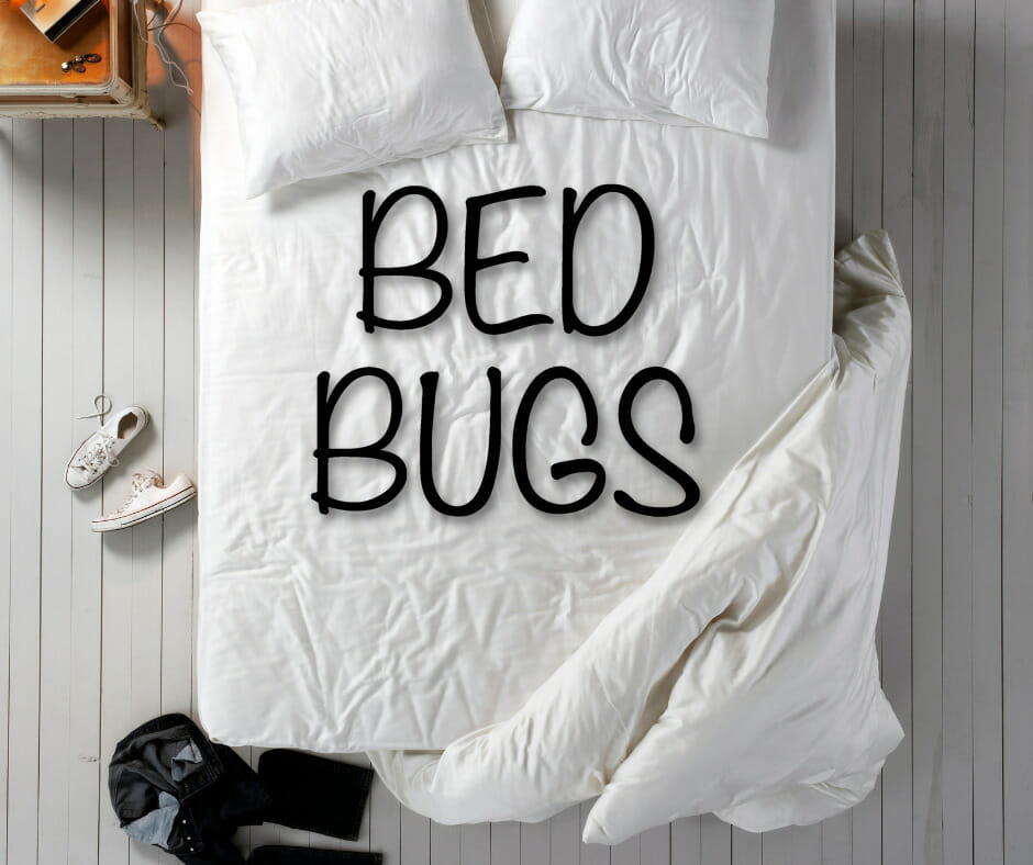 bed bugs concept 3